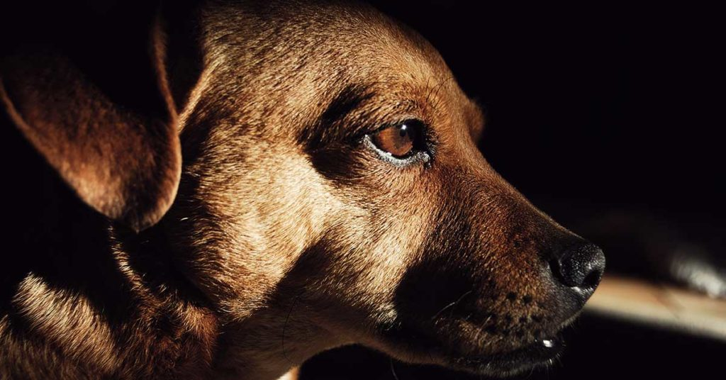 How Service Dogs Help Treat Depression & Anxiety